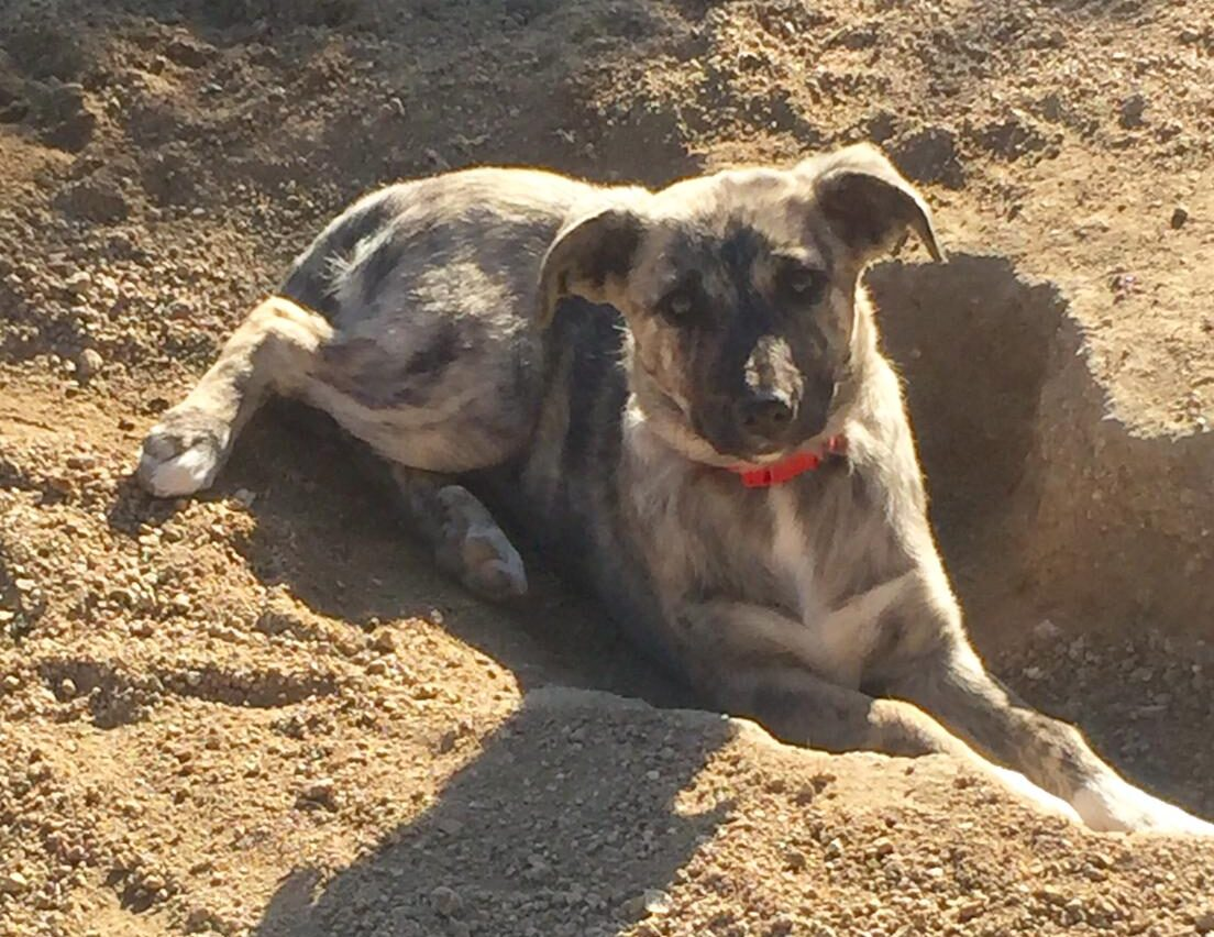 Meiga, cachorrita en adopción