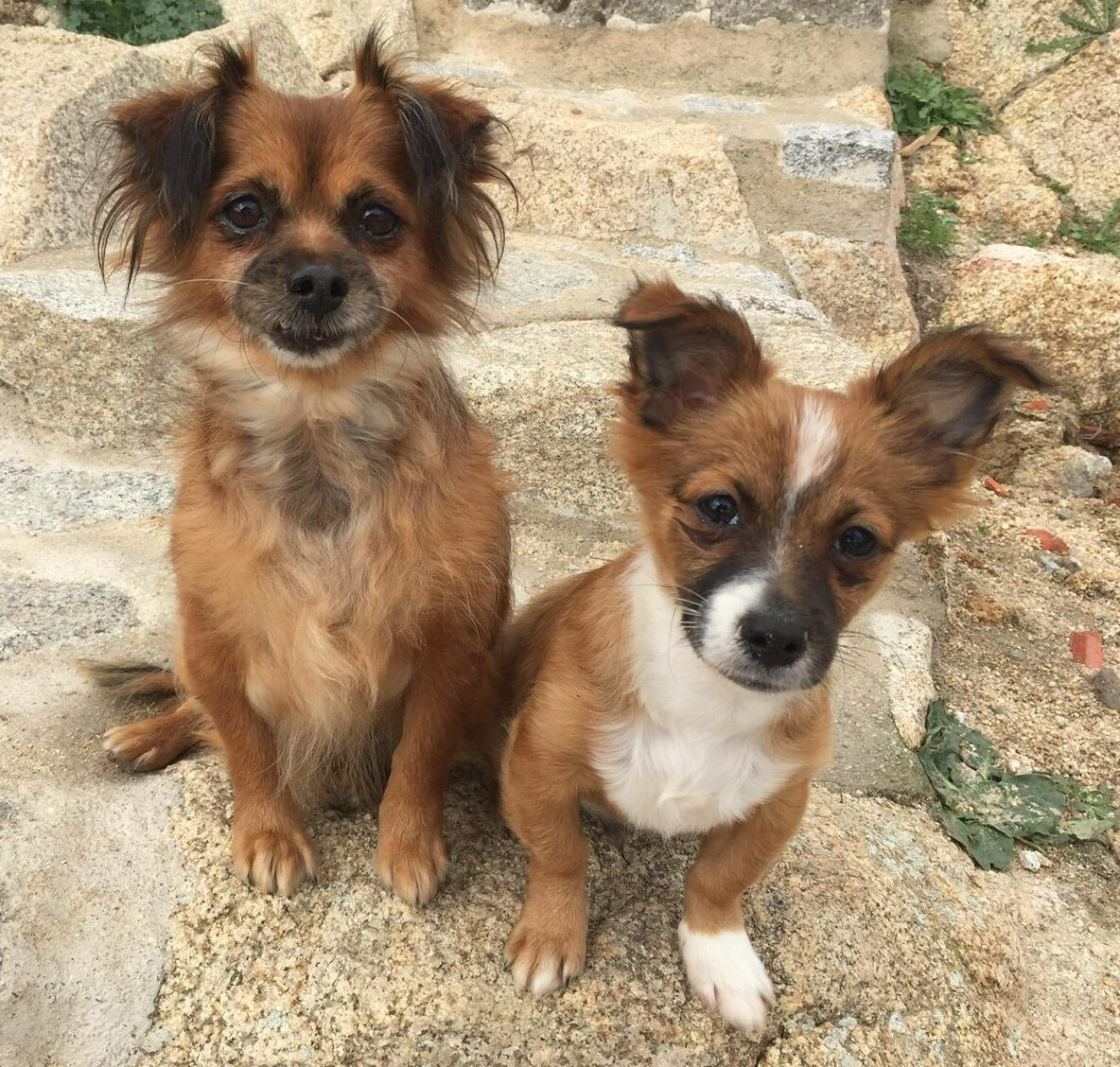 Melinda y Merlín, en adopción