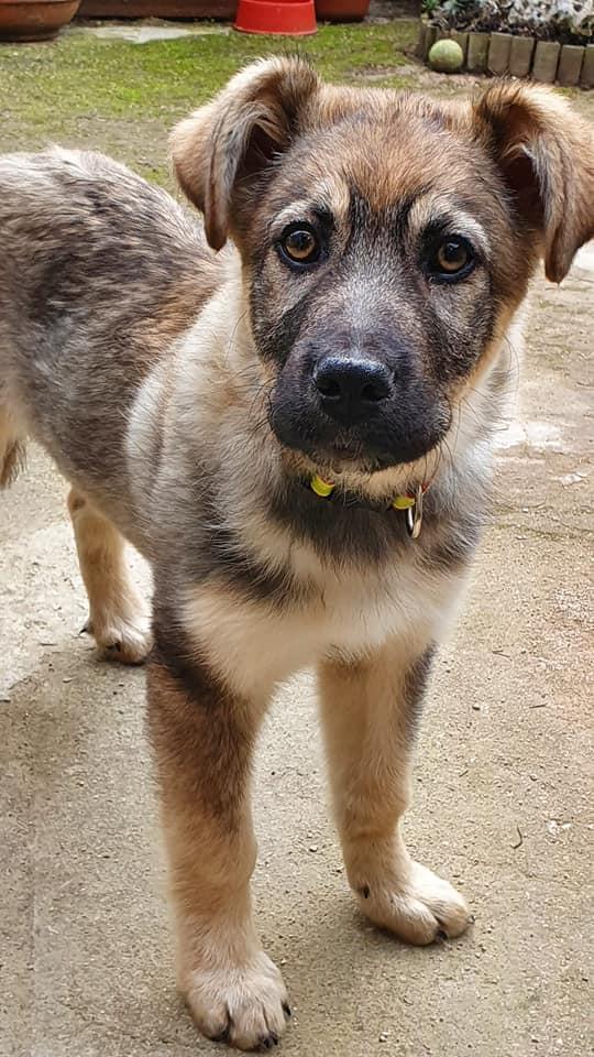 Amber, cachorrita en adopción