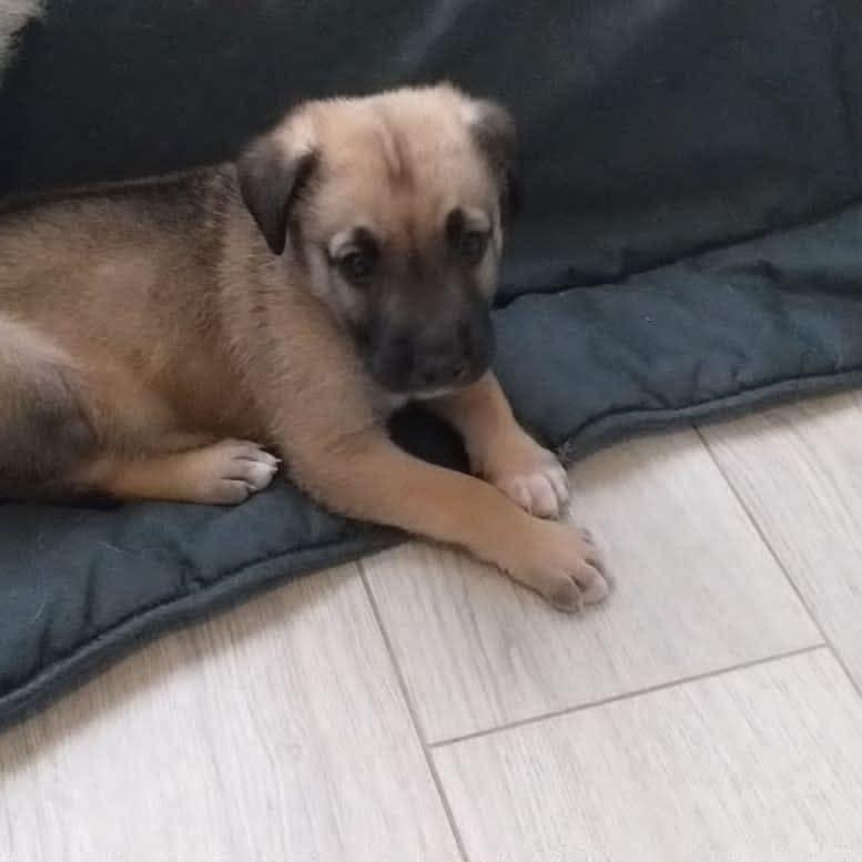 Luck, cachorrito en adopción