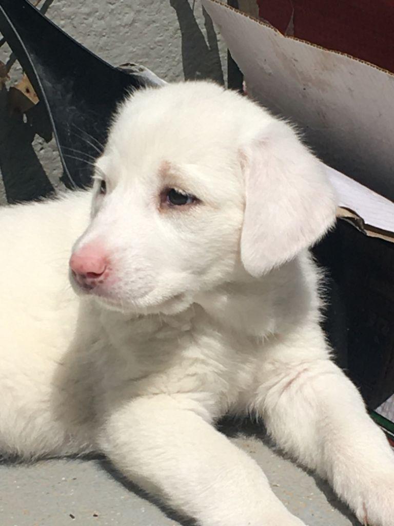 Aura, cachorrita en adopción en De CERO AdoptaUNO