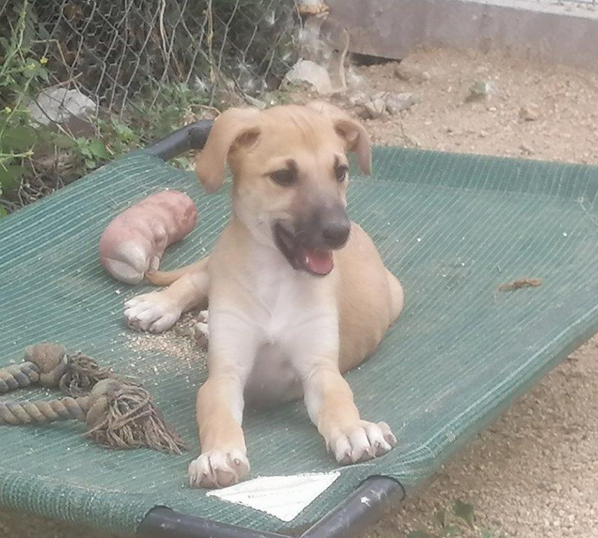 Luci, cachorrra en adopción en De CERO AdoptaUNO