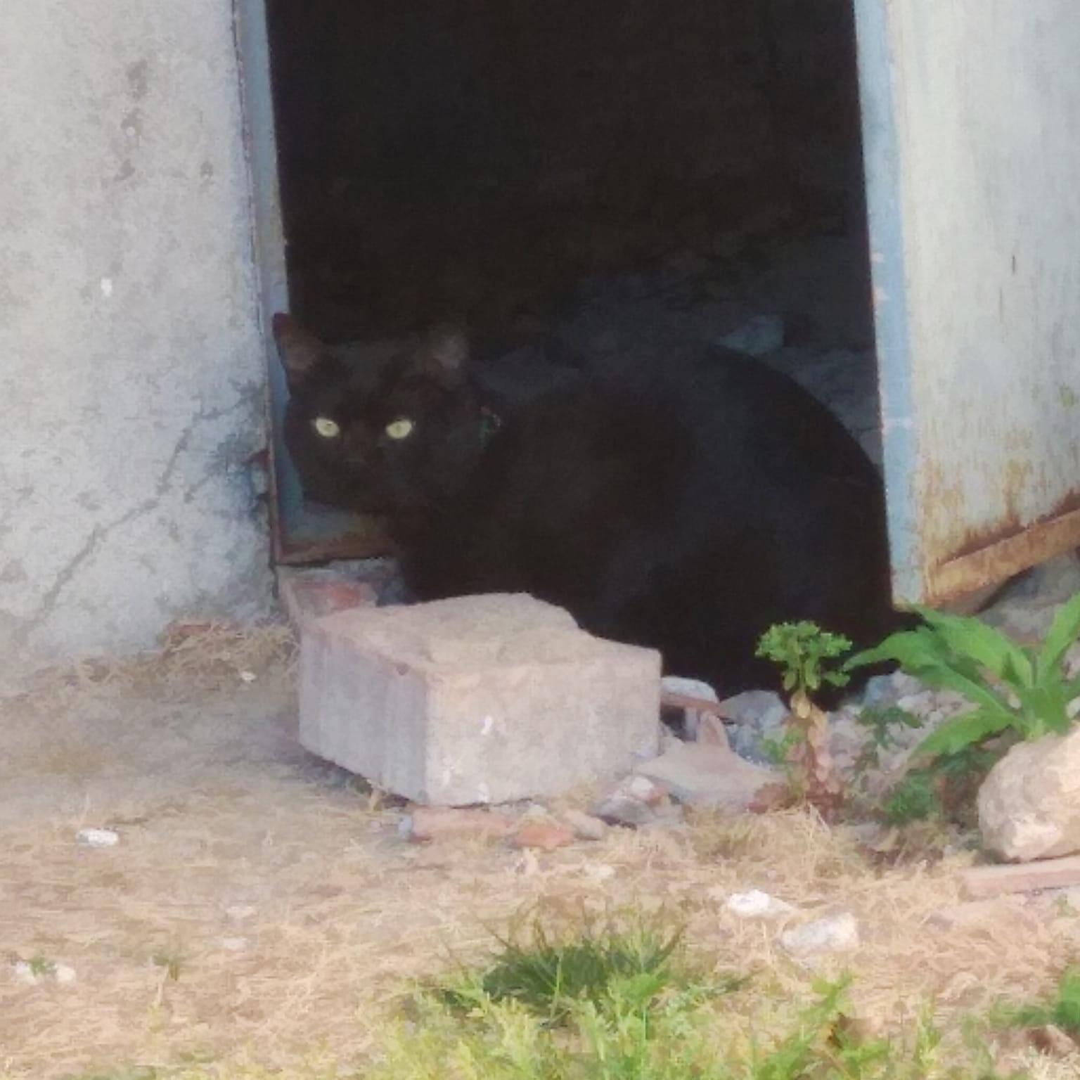 Luri, gato en adopción en De CERO AdoptaUNO