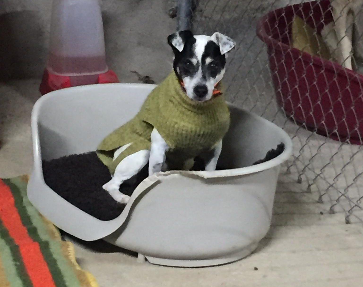 Ernesto en adopción