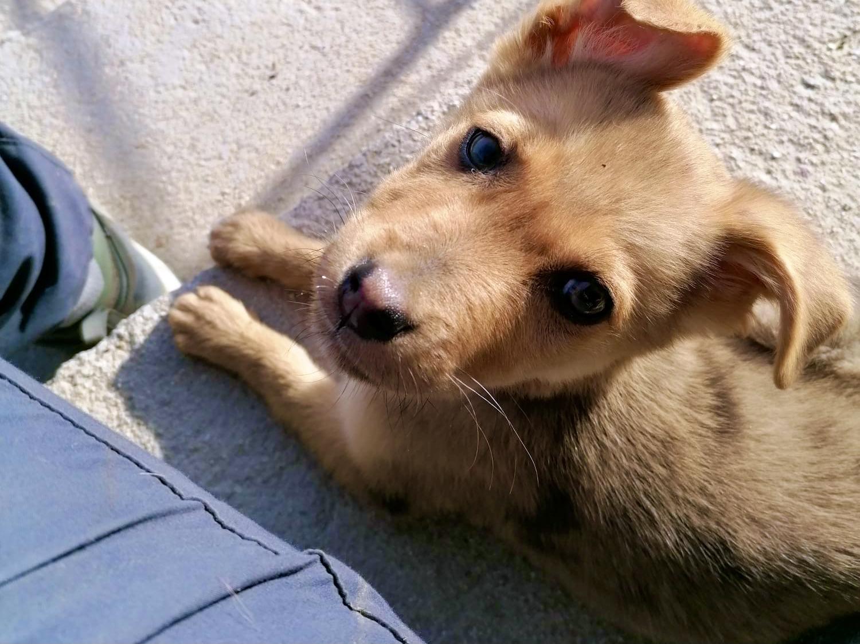 Dorita, cachorrita en adopción