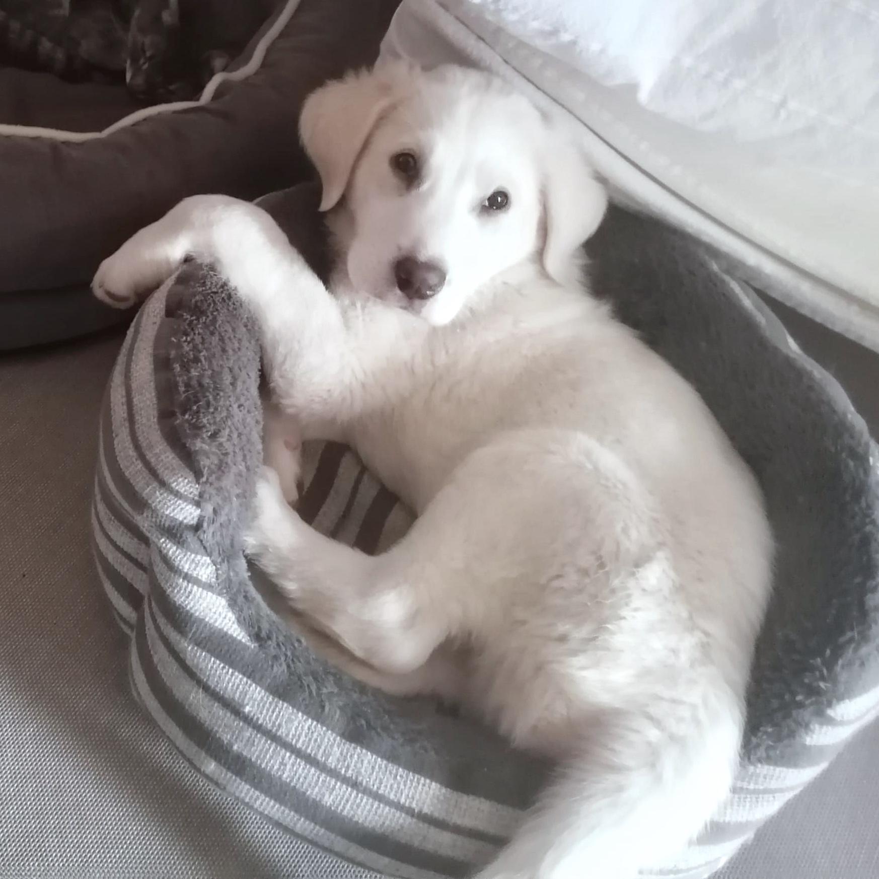 Copo, cachorro en adopción