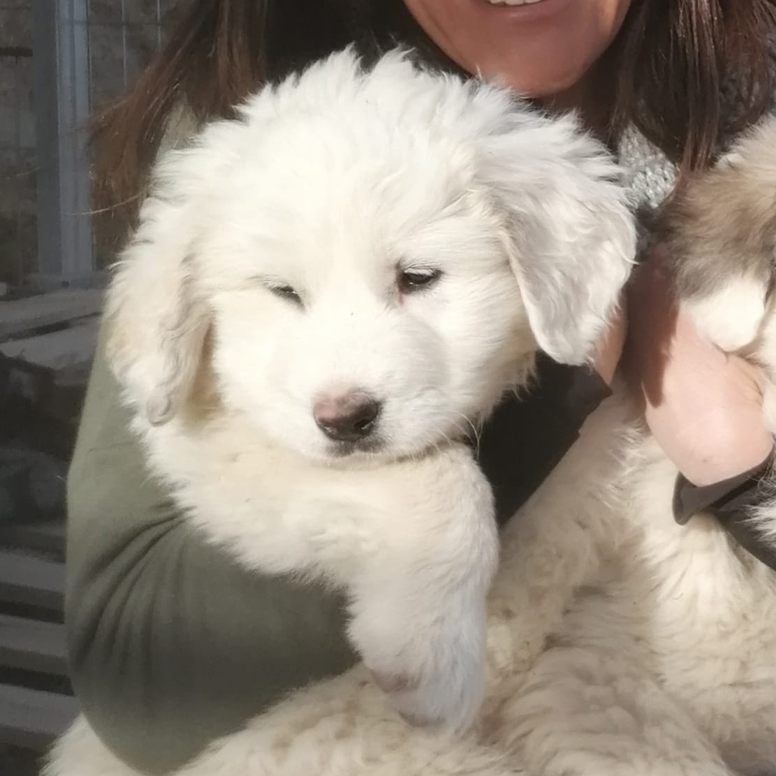 Nieve, cachorrita en adopción