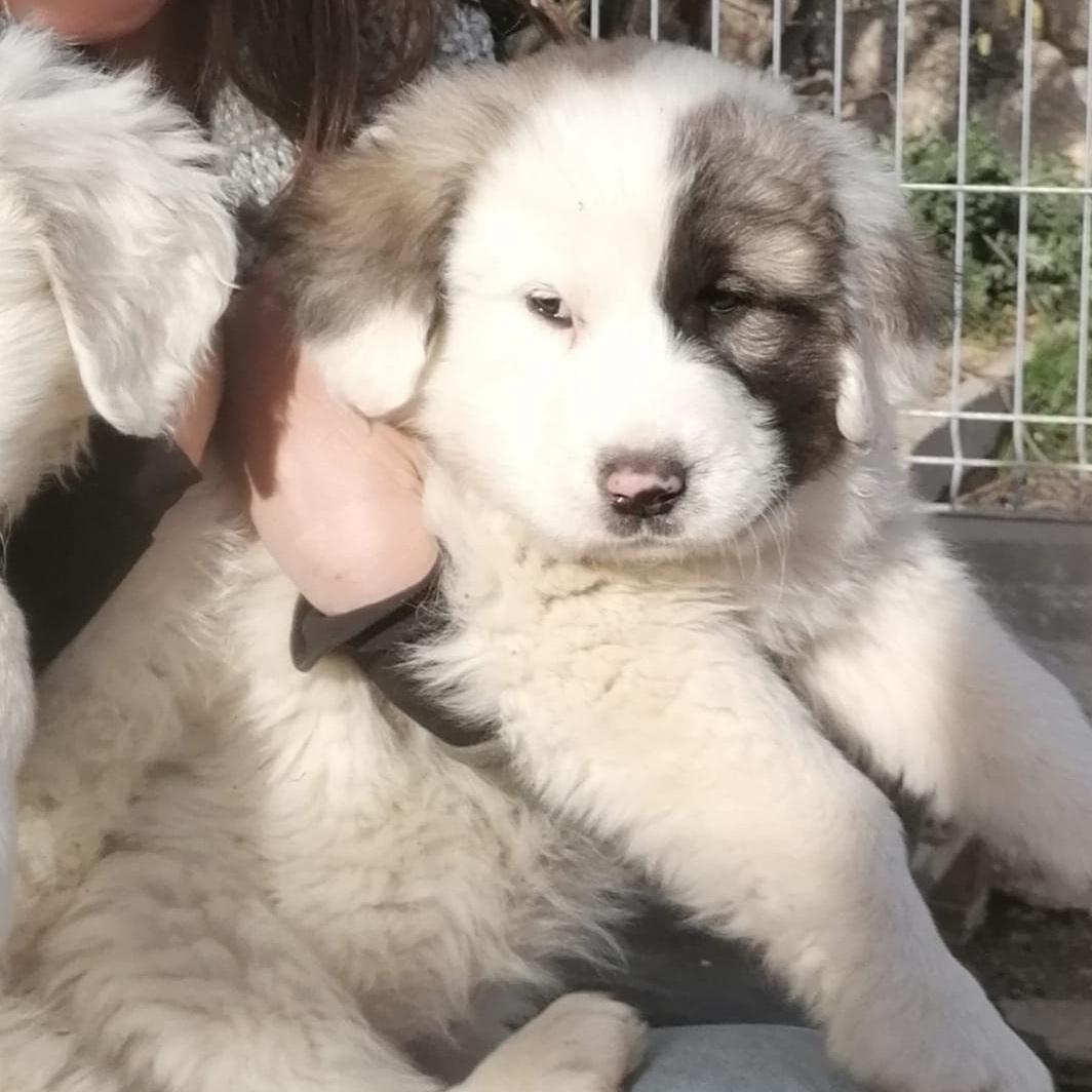Nube, cachorrita en adopción