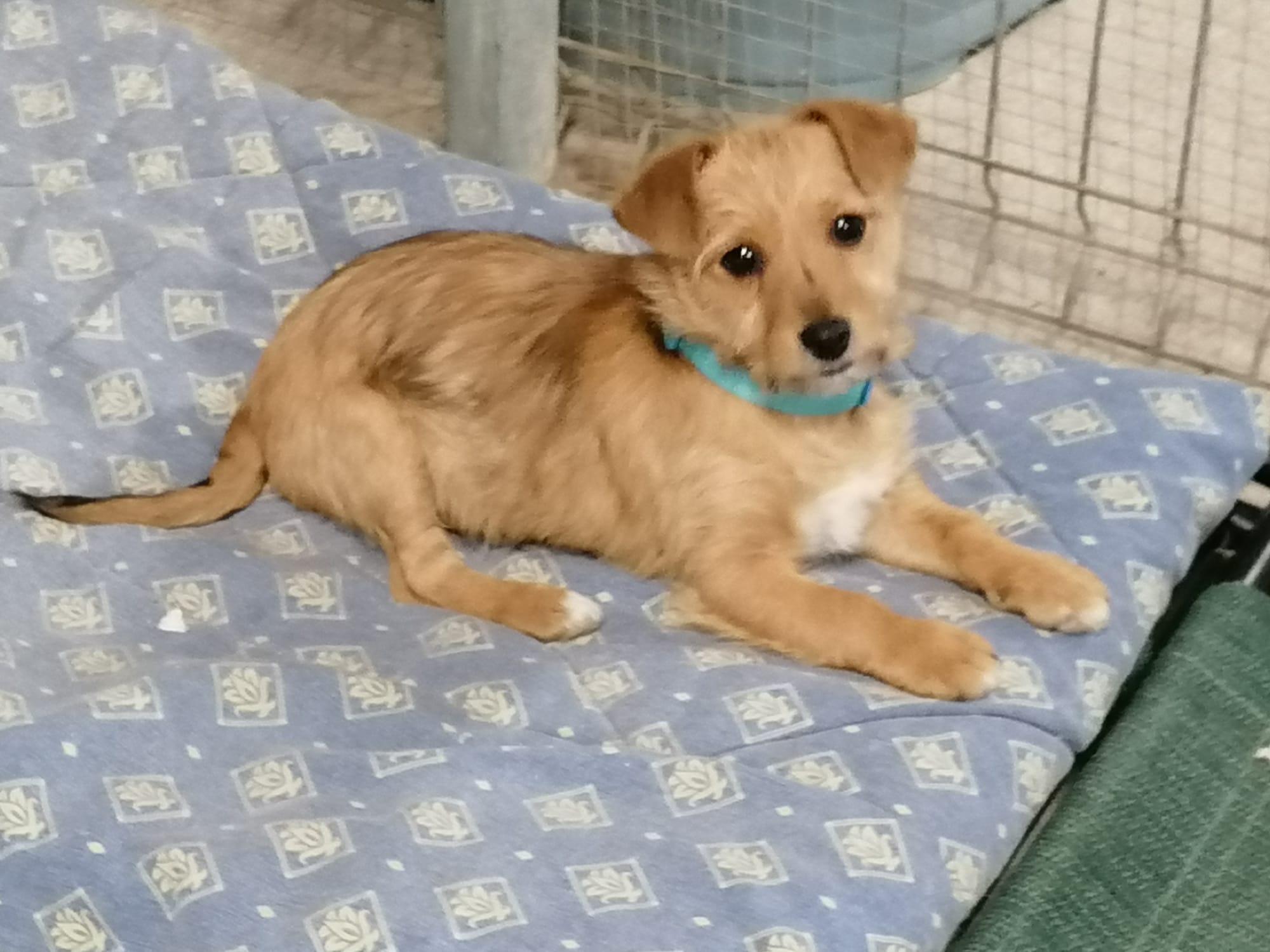 Teddy, cachorro en adopción