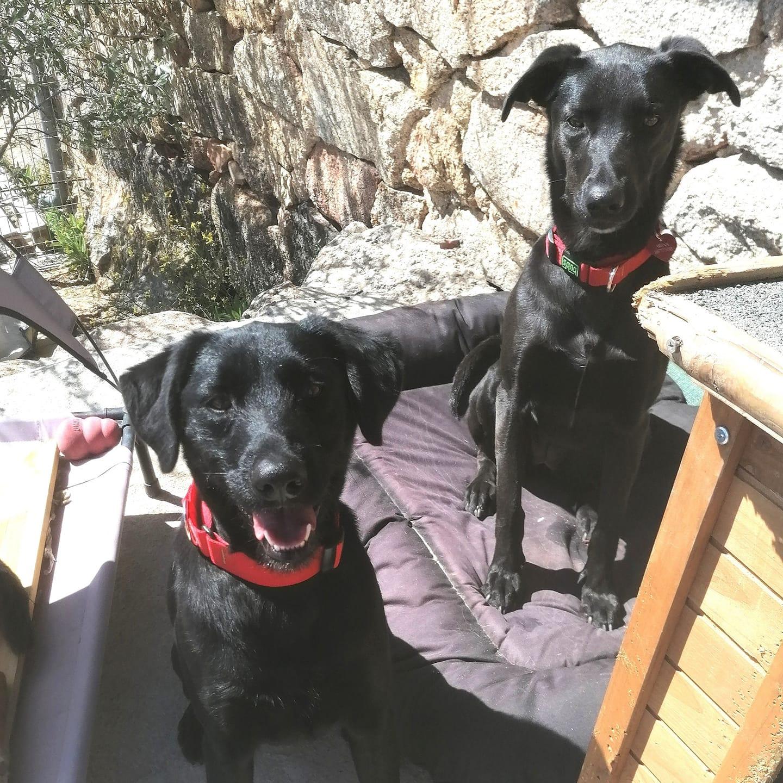 Rex & Regina, en adopción juntos