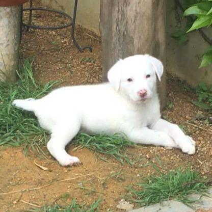 Alma, cachorrita en adopción en De CERO AdoptaUNO