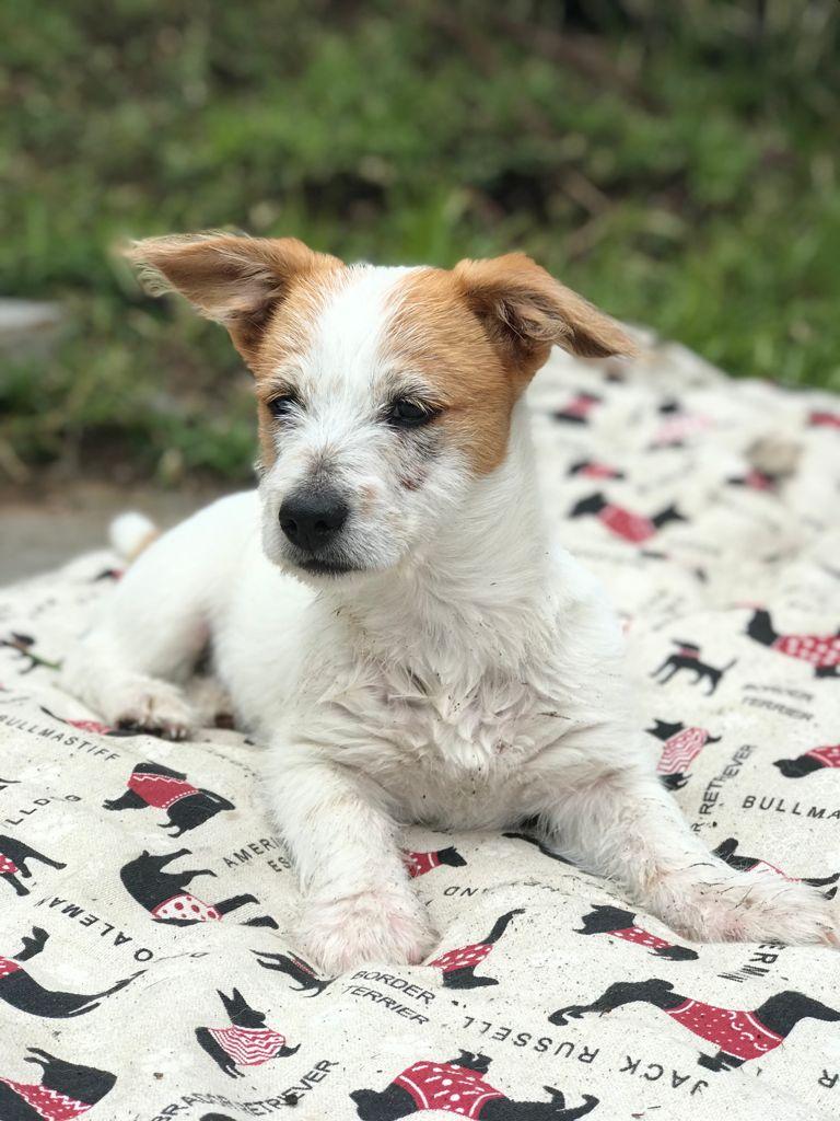 Fiti, perrito en adopción en De CERO AdoptaUNO