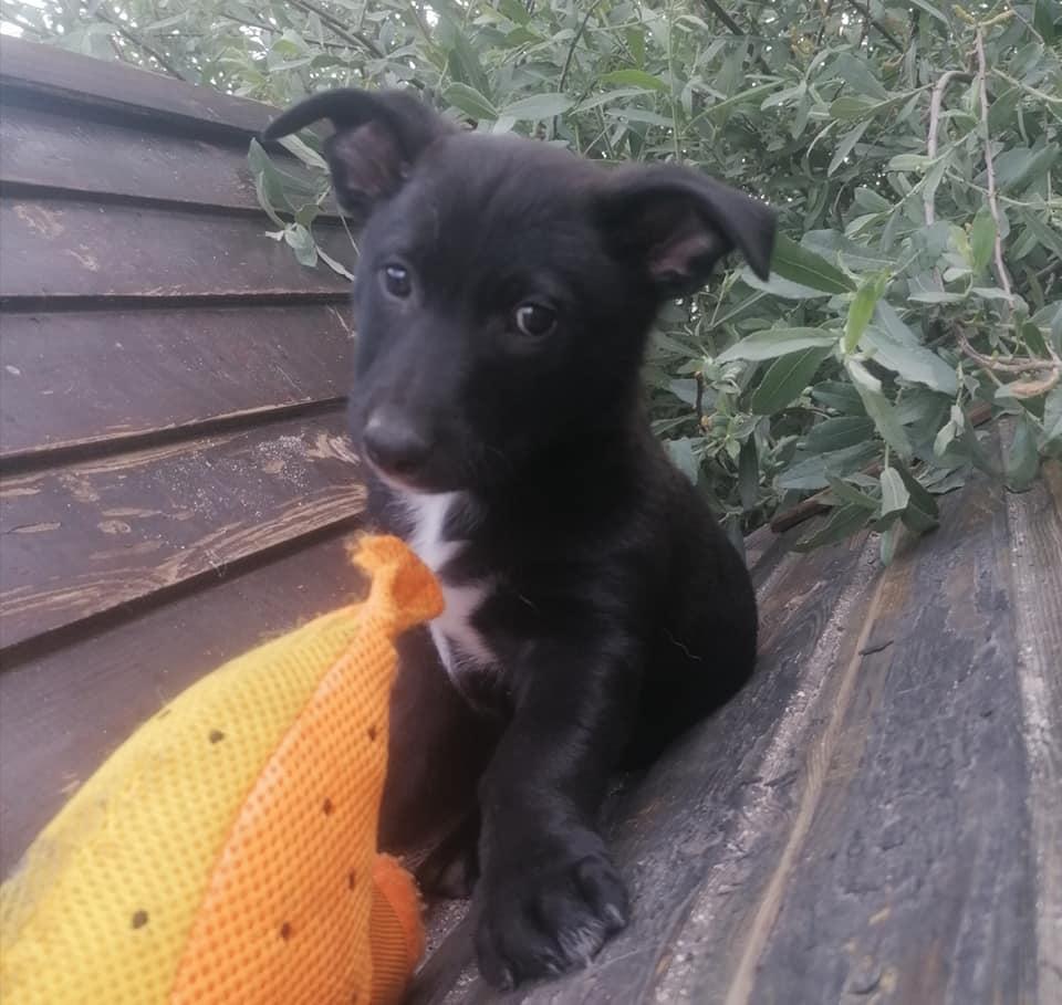 Chopito, cachorro en adopción en De CERO AdoptaUNO