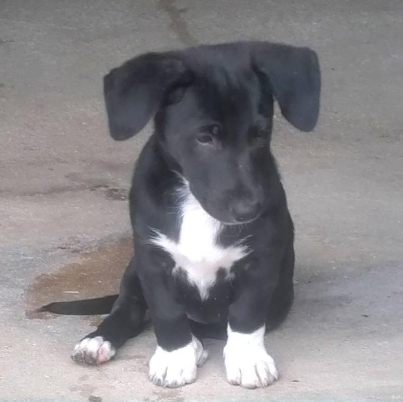 Tapón, cachorro en adopción en De CERO AdoptaUNO