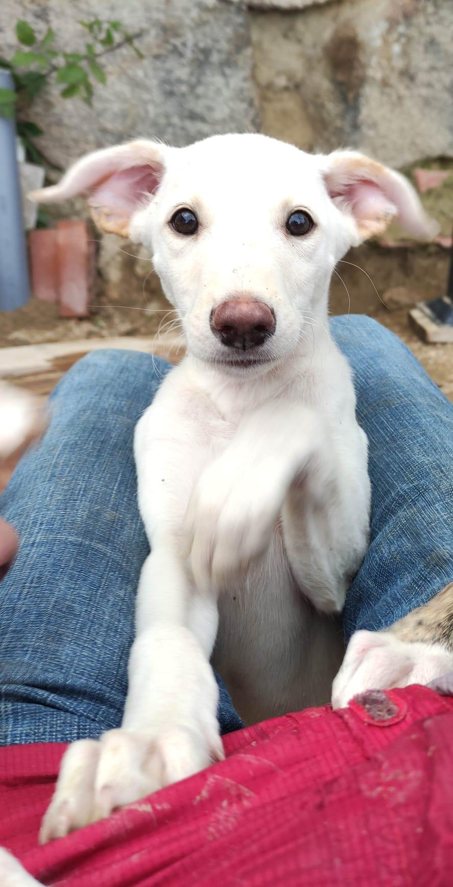 Roger, cachorrro en adopción en De CERO AdoptaUNO