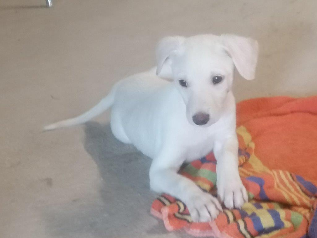 Chihiro, cachorrra en adopción en De CERO AdoptaUNO