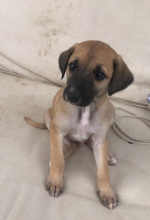 Lucero, cachorro en adopción en De CERO AdoptaUNO