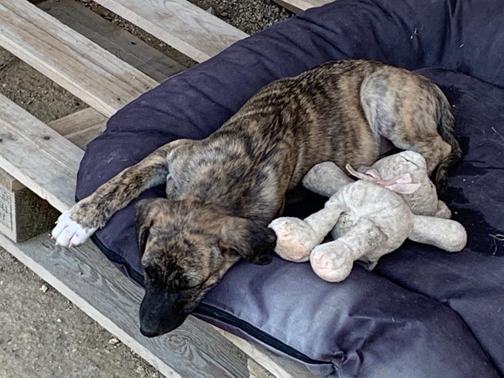 Nut, cachorro en adopción en De CERO AdoptaUNO