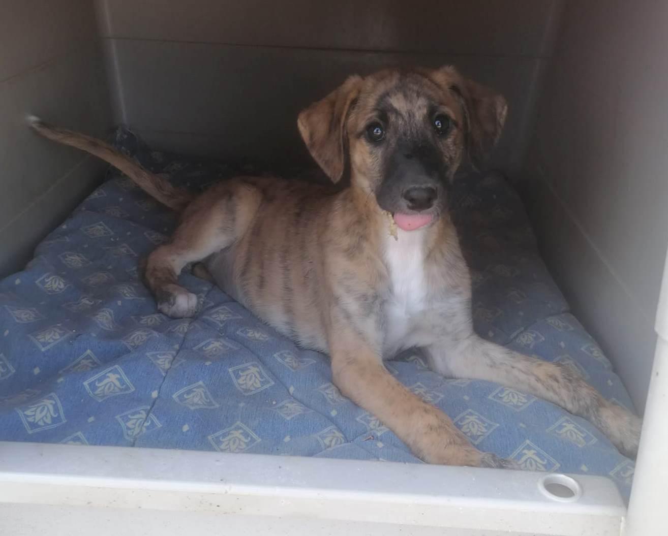 Pipa, cachorrra en adopción en De CERO AdoptaUNO