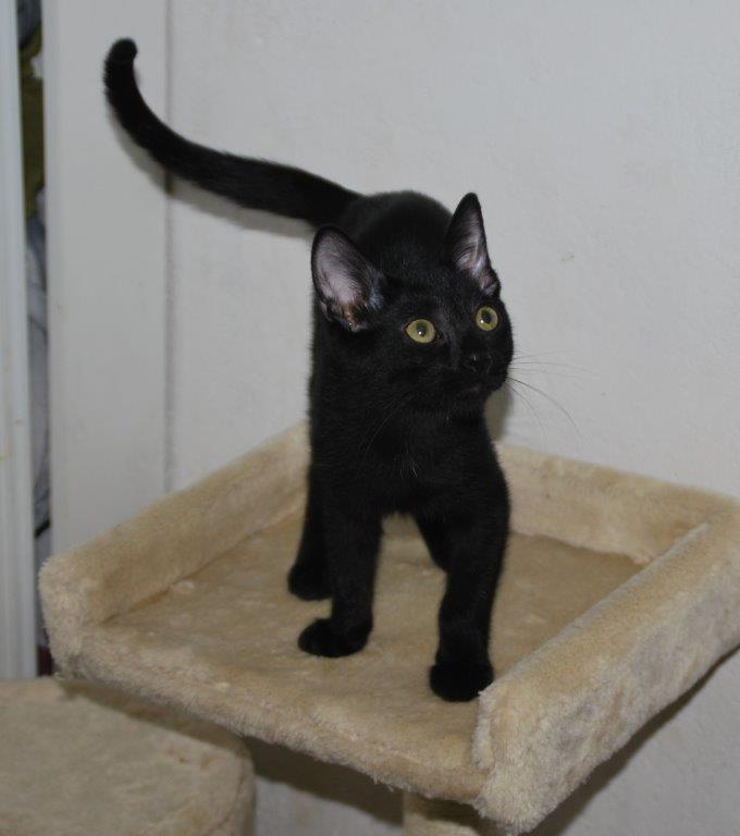 Hublot, gatito en adopción en De CERO AdoptaUNO