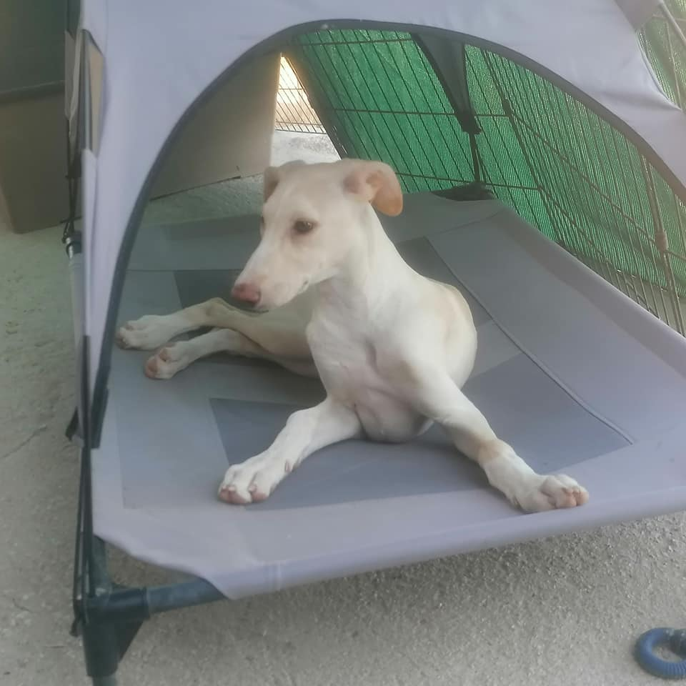 Rulo, cachorro en adopción en De CERO AdotaUNO