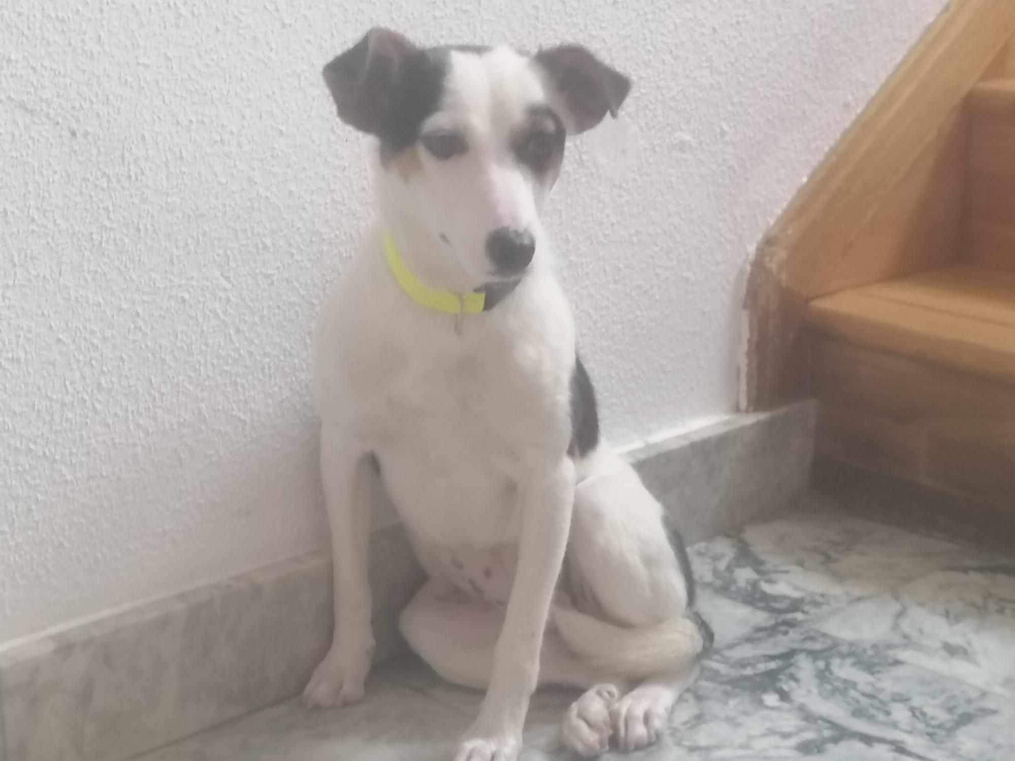 Luisa, perrita en adopción en De CERO AdoptaUNO