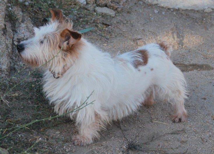 Milo, perro en adopción en De CERO AdoptaUNO